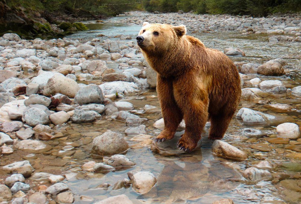 Raiul ursilor ,il gasesti la  Rezervaţia de la Zărneşti